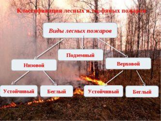 Виды лесных пожаров и их классификация
